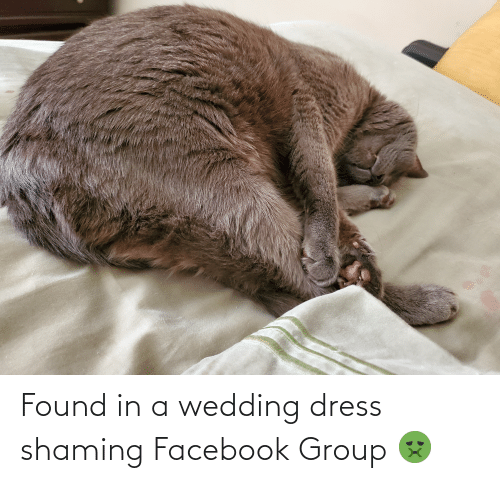 Shaming: Found in a wedding dress shaming Facebook Group 🤢