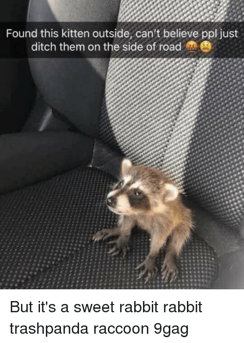 9gag, Memes, and Rabbit: Found this kitten outside, can't believe ppl just  ditch them on the side of road But it's a sweet rabbit⠀ rabbit trashpanda raccoon 9gag