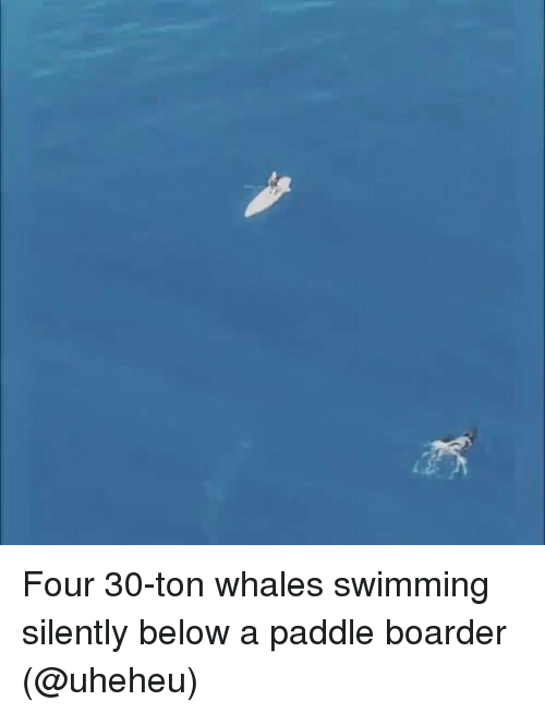 boarders: Four 30-ton whales swimming silently below a paddle boarder (@uheheu)