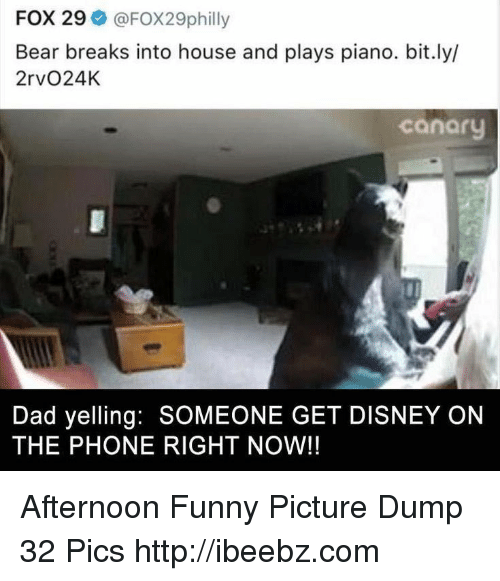 funny picture: FOX 29 @FOX29philly  Bear breaks into house and plays piano. bit.ly/  2rvO24K  canaru  Dad yelling: SOMEONE GET DISNEY ON  THE PHONE RIGHT NOW!! Afternoon Funny Picture Dump 32 Pics http://ibeebz.com