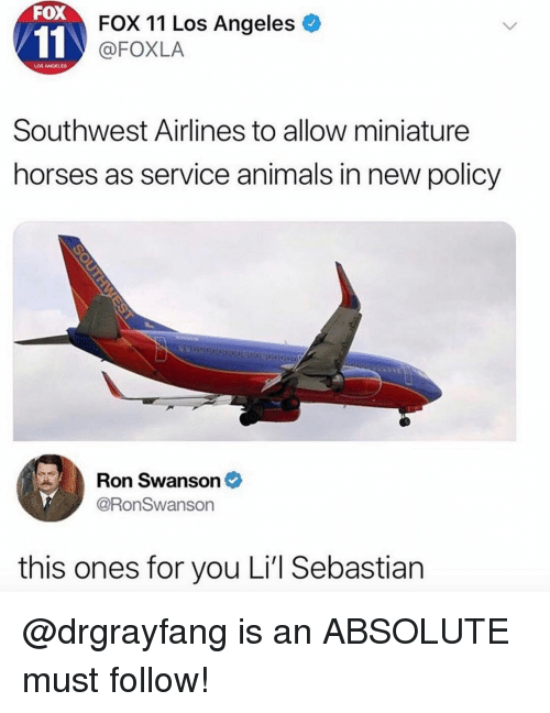 Animals, Horses, and Memes: FOX  FOX 11 Los Angeles  @FOXLA  LOS ANGELES  Southwest Airlines to allow miniature  horses as service animals in new policy  Ron Swanson  @RonSwanson  this ones for you Li'l Sebastian @drgrayfang is an ABSOLUTE must follow!