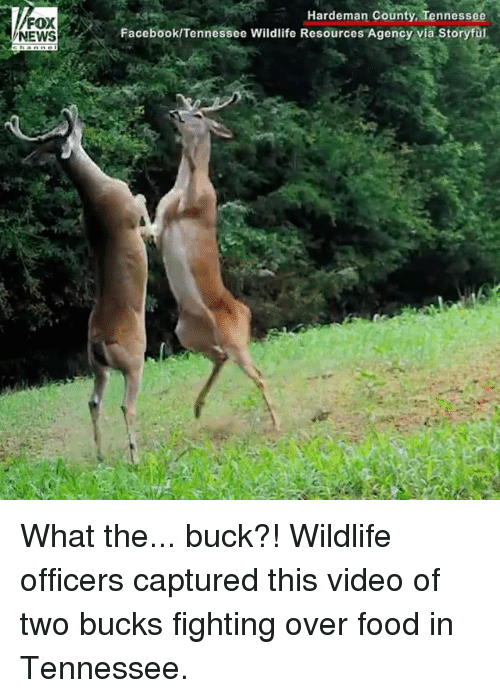 Bucked: FOX  NEWS  Hardeman County, Tennessee  Facebook/Tennessee Wildlife Resources Agency via Storyful, What the... buck?! Wildlife officers captured this video of two bucks fighting over food in Tennessee.