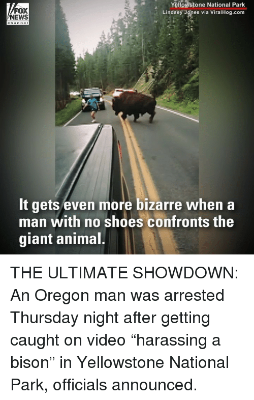"nol: FOX  NEWS  Yellowstone National Park  Lindsey Jones via ViralHog.com  chan nol  It gets even more bizarre when a  man with no shoes confronts the  giant animal THE ULTIMATE SHOWDOWN: An Oregon man was arrested Thursday night after getting caught on video ""harassing a bison"" in Yellowstone National Park, officials announced."