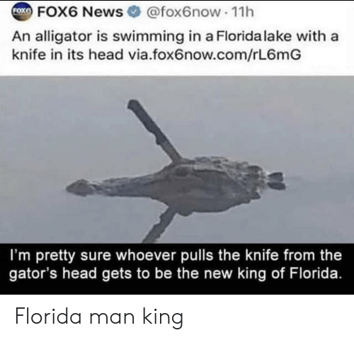Foxe: FOX6 News @fox6now 1h  FOXE  An alligator is swimming in a Florida lake with a  knife in its head via.fox6now.com/rL6mG  I'm pretty sure whoever pulls the knife from the  gator's head gets to be the new king of Florida. Florida man king