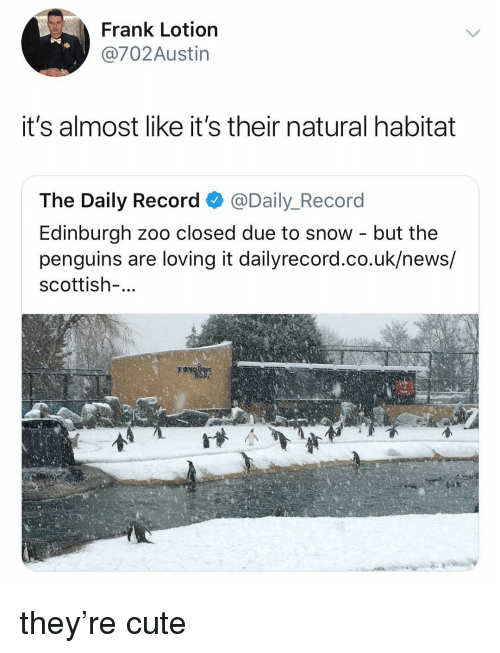 Cute, News, and Penguins: Frank Lotion  @702Austin  it's almost like it's their natural habitat  The Daily Record @Daily_Record  Edinburgh zoo closed due to snow - but the  penguins are loving it dailyrecord.co.uk/news/  scottish-... they're cute