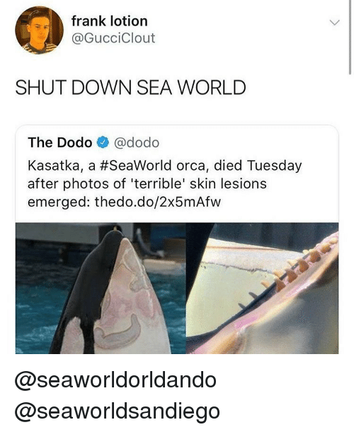 Emerged: frank lotion  @GucciClout  SHUT DOWN SEA WORLD  The Dodo @dodo  Kasatka, a #SeaWorld orca, died Tuesday  after photos of 'terrible' skin lesions  emerged: thedo.do/2x5mAfw @seaworldorldando @seaworldsandiego