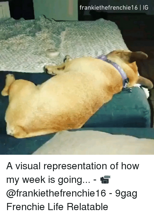 Frenchie: frankiethefrenchie16 IG A visual representation of how my week is going... - 📹 @frankiethefrenchie16 - 9gag Frenchie Life Relatable