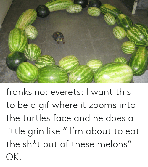 "turtles: franksino: everets:  I want this to be a gif where it zooms into the turtles face and he does a little grin like "" I'm about to eat the sh*t out of these melons""  OK."