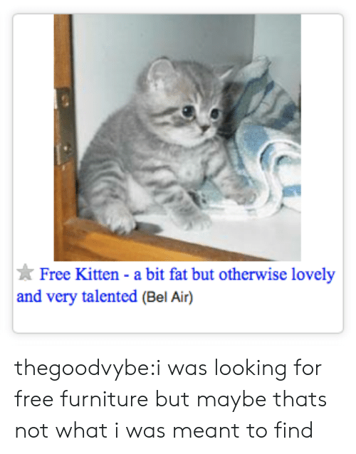 Tumblr, Blog, and Free: Free Kitten - a bit fat but otherwise lovely  and very talented (Bel Air) thegoodvybe:i was looking for free furniture but maybe thats not what i was meant to find