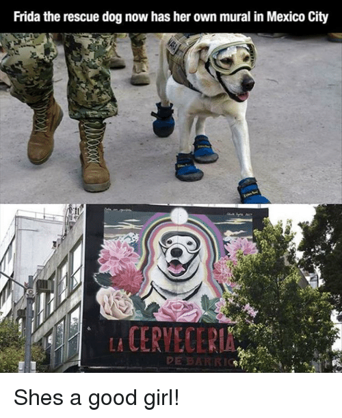 Girl, Good, and Mexico: Frida the rescue dog now has her own mural in Mexico City  st  CERVECERIA Shes a good girl!