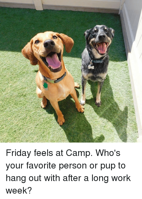 Friday Feels At Camp Whos Your Favorite Person Or Pup To Hang Out