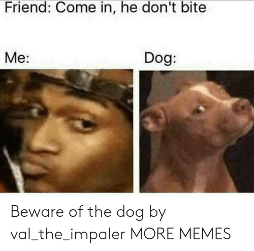 Dank, Memes, and Target: Friend: Come in, he don't bite  Me:  Dog Beware of the dog by val_the_impaler MORE MEMES