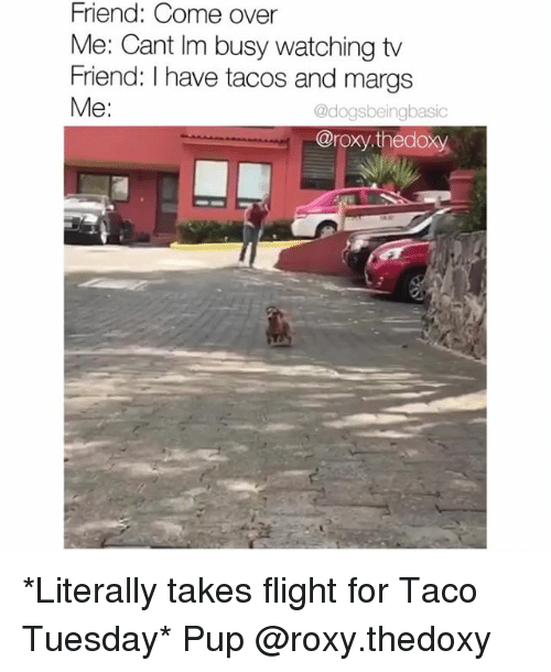 roxy: Friend: Come over  Me: Cant Im busy watching tv  Friend: I have tacos and margs  Me:  @dogsbeingbasic  @roxy.thedoxy *Literally takes flight for Taco Tuesday* Pup @roxy.thedoxy