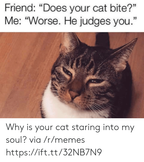 """My Soul: Friend: """"Does your cat bite?""""  Me: """"Worse. He judges you. Why is your cat staring into my soul? via /r/memes https://ift.tt/32NB7N9"""