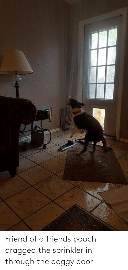 pooch: Friend of a friends pooch dragged the sprinkler in through the doggy door