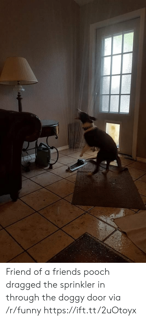 pooch: Friend of a friends pooch dragged the sprinkler in through the doggy door via /r/funny https://ift.tt/2uOtoyx