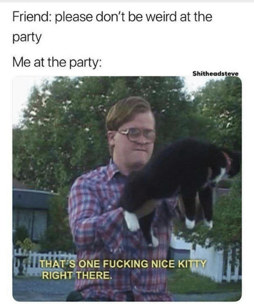 Shitheadsteve: Friend: please don't be weird at the  party  Me at the party:  Shitheadsteve  S ONE FUCKING NICE KITTY  RIGHT THERE