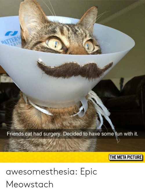 Friends, Tumblr, and Blog: Friends cat had surgery. Decided to have some fun with it.  THE META PICTURE awesomesthesia:  Epic Meowstach