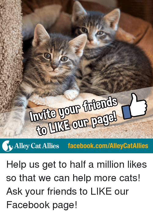 alley cats: friends  Invite your page  to our LIKE Alley Cat Allies  facebook.com/AlleyCatAllies Help us get to half a million likes so that we can help more cats! Ask your friends to LIKE our Facebook page!