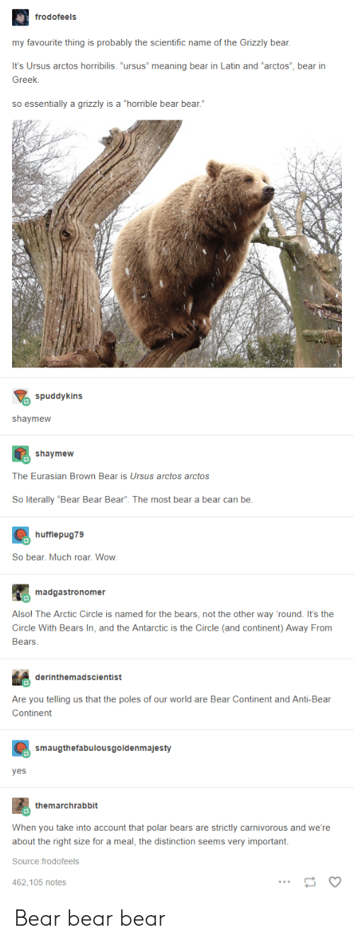 """carnivorous: frodofeels  my favourite thing is probably the scientific name of the Grizzly bear,  It's Ursus arctos horribilis. """"ursus"""" meaning bear in Latin and """"arctos"""", bear irn  Greek.  so essentially a grizzly is a """"horrible bear bear.""""  spuddykins  shaymeww  shaymew  The Eurasian Brown Bear is Ursus arctos arctos  So literally """"Bear Bear Bear"""". The most bear a bear can be  hufflepug79  So bear. Much roar. Wow  madgastronomer  Alsol The Arctic Circle is named for the bears, not the other way 'round. It's the  Circle With Bears In, and the Antarctic is the Circle (and continent) Away From  Bears  derinthemadscientist  Are you telling us that the poles of our world are Bear Continent and Anti-Bear  Continent  smaugthefabulousgoldenmajesty  yes  themarchrabbit  When you take into account that polar bears are strictly carnivorous and we're  about the right size for a meal, the distinction seems very important.  Source:frodofeels  462.105 notes Bear bear bear"""