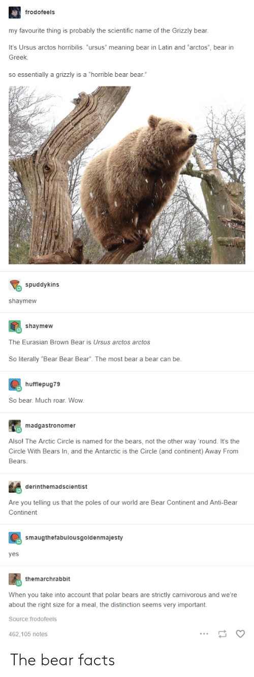 """carnivorous: frodofeels  my favourite thing is probably the scientific name of the Grizzly bear,  It's Ursus arctos horribilis. """"ursus"""" meaning bear in Latin and """"arctos"""", bear irn  Greek.  so essentially a grizzly is a """"horrible bear bear.""""  spuddykins  shaymeww  shaymew  The Eurasian Brown Bear is Ursus arctos arctos  So literally """"Bear Bear Bear"""". The most bear a bear can be  hufflepug79  So bear. Much roar. Wow  madgastronomer  Alsol The Arctic Circle is named for the bears, not the other way 'round. It's the  Circle With Bears In, and the Antarctic is the Circle (and continent) Away From  Bears  derinthemadscientist  Are you telling us that the poles of our world are Bear Continent and Anti-Bear  Continent  smaugthefabulousgoldenmajesty  yes  themarchrabbit  When you take into account that polar bears are strictly carnivorous and we're  about the right size for a meal, the distinction seems very important.  Source:frodofeels  462.105 notes The bear facts"""