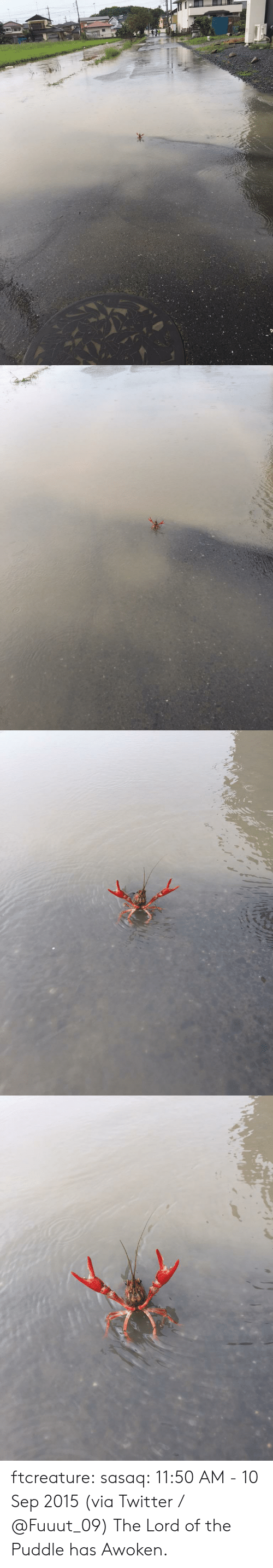 10 Sep: ftcreature:  sasaq:  11:50 AM - 10 Sep 2015 (via Twitter / ふ み な @Fuuut_09)    The Lord of the Puddle has Awoken.