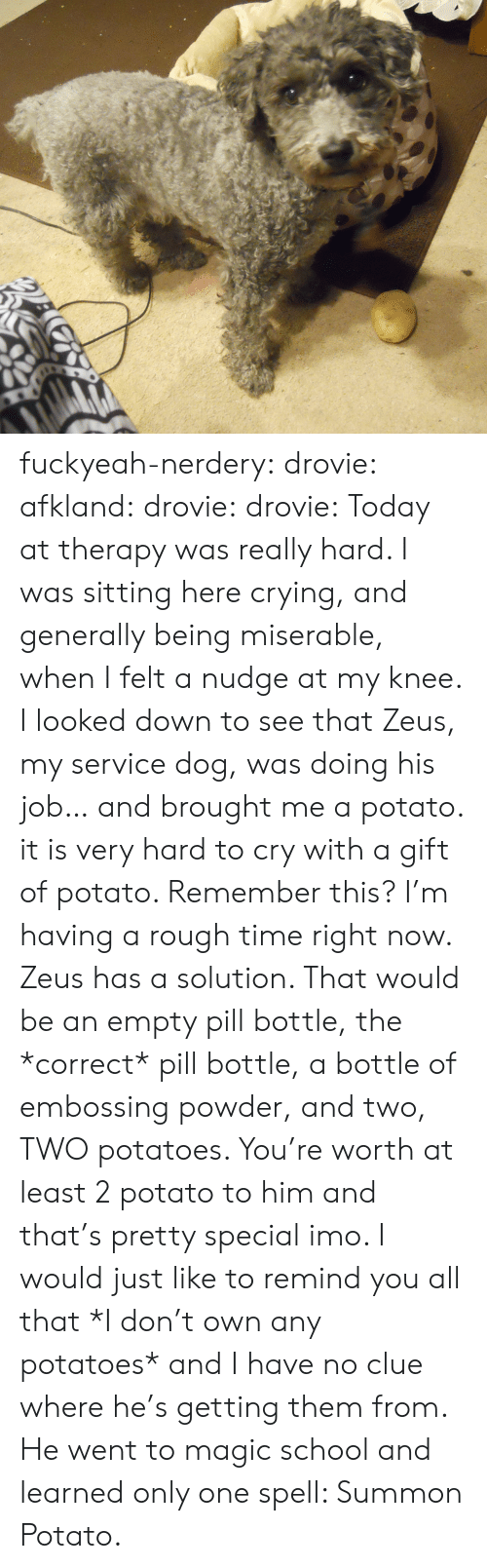Crying, School, and Tumblr: fuckyeah-nerdery:  drovie:  afkland:  drovie:  drovie:  Today at therapy was really hard. I was sitting here crying, and generally being miserable, when I felt a nudge at my knee. I looked down to see that Zeus, my service dog, was doing his job… and brought me a potato. it is very hard to cry with a gift of potato.   Remember this? I'm having a rough time right now. Zeus has a solution.  That would be an empty pill bottle, the *correct* pill bottle, a bottle of embossing powder, and two, TWO potatoes.   You're worth at least 2 potato to him and that's pretty special imo.   I would just like to remind you all that *I don't own any potatoes* and I have no clue where he's getting them from.   He went to magic school and learned only one spell: Summon Potato.