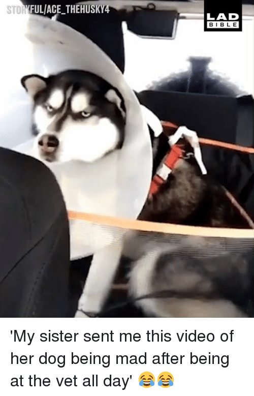 Dank, Bible, and Video: FULACE THEHUSK  LAD  BIBLE 'My sister sent me this video of her dog being mad after being at the vet all day' 😂😂