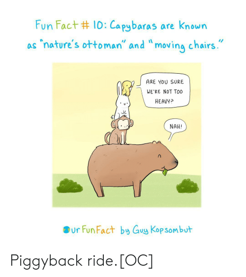 "kop: Fun Fact #10:Capybaras are known  ""nature's ottoman"" and ""moving chairs.  as  ARE YOU SURE  WE'RE NOT TO0  HEAVY?  NAH!  ur Fun Fact by Guy Kop sombut Piggyback ride.[OC]"