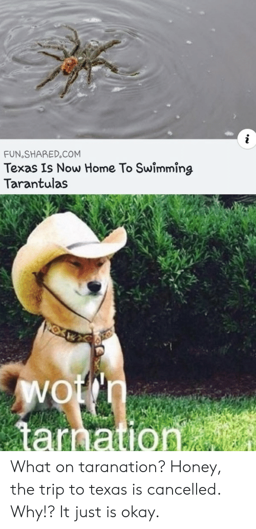 Shared: FUN SHARED.COM  Texas Is Now Home To Swimming  Tarantulas  Wotn  tarnation What on taranation? Honey, the trip to texas is cancelled. Why!? It just is okay.