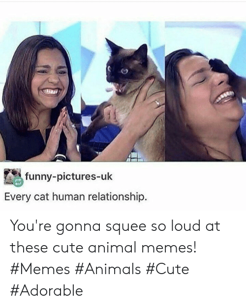 Animals, Cute, and Funny: funny-pictures-uk  Every cat human relationship. You're gonna squee so loud at these cute animal memes! #Memes #Animals #Cute #Adorable
