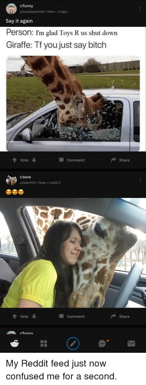 Aww, Bitch, and Confused: /funny  u/soulessp4nda Now i.imgur  Say it again  Person: I'm glad Toys R us shut dowr  Giraffe: Tf you just say bitch  Vote  Comment  Share  r/aww  u/Alec935 Now i.redd.it  Vote  Comment  Share  SURA r/funnv