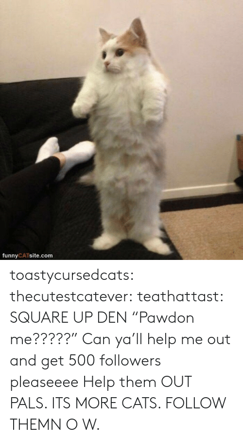 "Cats, Square Up, and Tumblr: funnyCATsite.com toastycursedcats:  thecutestcatever:  teathattast: SQUARE UP DEN ""Pawdon me?????""  Can ya'll help me out and get 500 followers pleaseeee   Help them OUT PALS. ITS MORE CATS. FOLLOW THEMN O W."