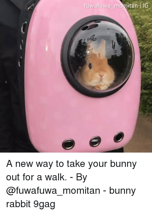 9gag, Memes, and Rabbit: fuwafuwa momitanl IG A new way to take your bunny out for a walk. - By @fuwafuwa_momitan - bunny rabbit 9gag