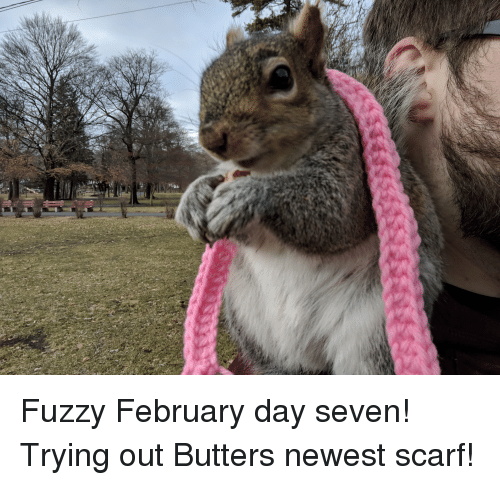butters: Fuzzy February day seven! Trying out Butters newest scarf!
