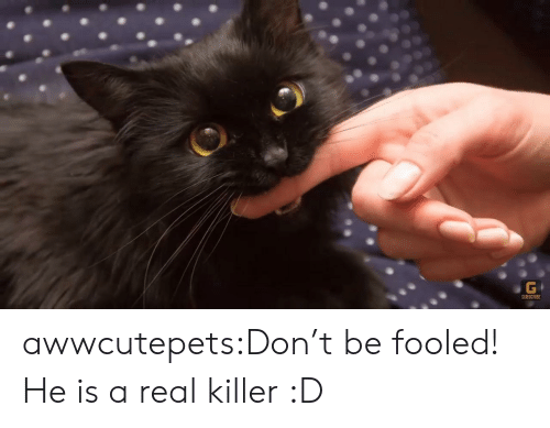 Subscribe: G  SUBSCRIBE awwcutepets:Don't be fooled! He is a real killer :D
