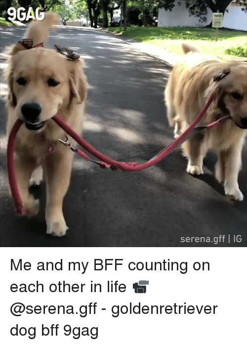 9gag, Life, and Memes: GA  serena.gff I IG Me and my BFF counting on each other in life 📹 @serena.gff - goldenretriever dog bff 9gag