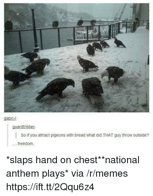 Memes, National Anthem, and Freedom: gabr-  guardtristan  So if you attract pigeons with bread what did THAT guy throw outside?  ....freedom. *slaps hand on chest**national anthem plays* via /r/memes https://ift.tt/2Qqu6z4