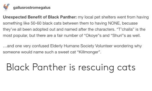 "Humane Society: gallusrostromegalus  Unexpected Benefit of Black Panther: my local pet shelters went from having  something like 50-60 black cats between them to having NONE, becuase  they've all been adopted out and named after the characters. ""T'challa"" is the  most popular, but there are a fair number of ""Okoye""s and ""Shuri""s as well  ...and one very confused Elderly Humane Society Volunteer wondering why  someone would name such a sweet cat ""Killmonger"" Black Panther is rescuing cats"