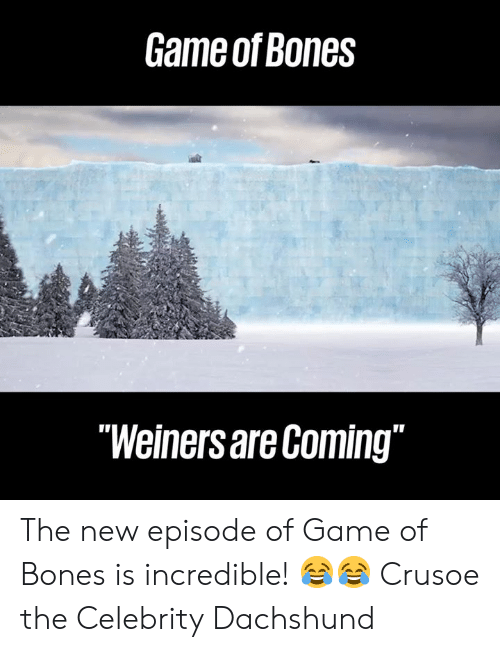 """dachshund: Game of Bones  """"Weiners are Coming"""" The new episode of Game of Bones is incredible! 😂😂  Crusoe the Celebrity Dachshund"""