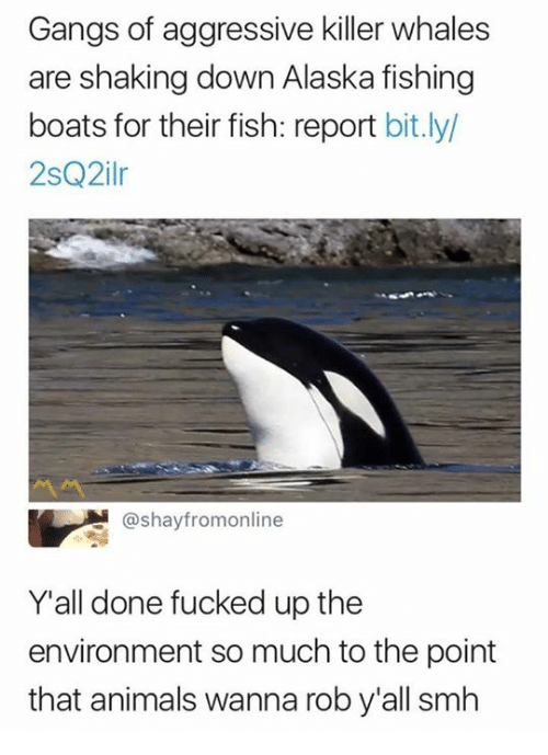 Reportate: Gangs of aggressive killer whales  are shaking down Alaska fishing  boats for their fish: report bit.ly  2sQ2ilr  @shayfromonline  Y'all done fucked up the  environment so much to the point  that animals wanna rob y'all smh