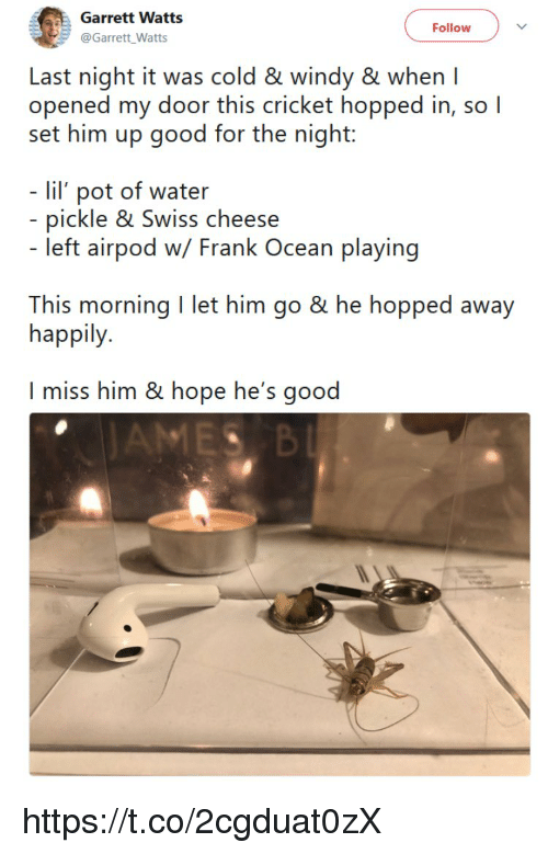 Frank Ocean, Memes, and Cricket: Garrett Watts  @Garrett_Watts  Follow  Last night it was cold & windy & whenI  opened my door this cricket hopped in, so l  set him up good for the night:  - lil pot of water  - pickle & Swiss cheese  left airpod w/ Frank Ocean playing  This morning I let him go & he hopped away  happily  I miss him & hope he's good https://t.co/2cgduat0zX