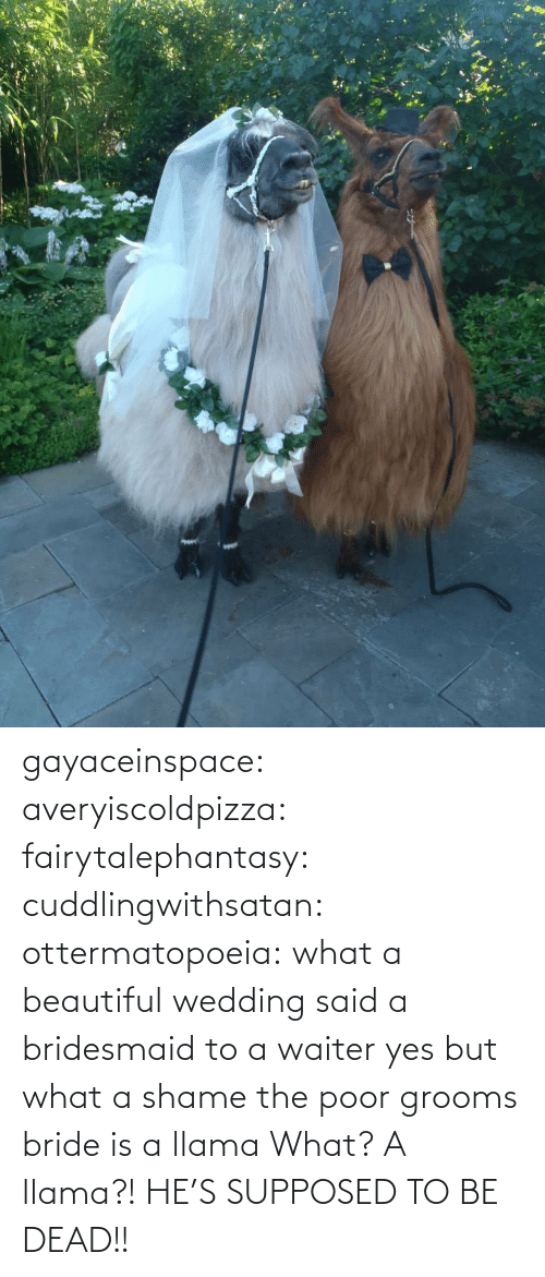 Wedding: gayaceinspace: averyiscoldpizza:  fairytalephantasy:  cuddlingwithsatan:  ottermatopoeia:  what a beautiful wedding  said a bridesmaid to a waiter  yes but what a shame  the poor grooms bride is a llama  What? A llama?! HE'S SUPPOSED TO BE DEAD!!