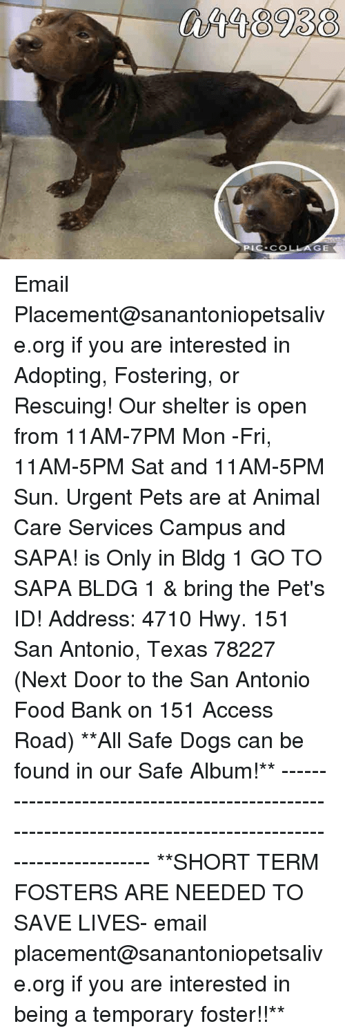 Aing: GE Email Placement@sanantoniopetsalive.org if you are interested in Adopting, Fostering, or Rescuing!  Our shelter is open from 11AM-7PM Mon -Fri, 11AM-5PM Sat and 11AM-5PM Sun.  Urgent Pets are at Animal Care Services Campus and SAPA! is Only in Bldg 1 GO TO SAPA BLDG 1 & bring the Pet's ID! Address: 4710 Hwy. 151 San Antonio, Texas 78227 (Next Door to the San Antonio Food Bank on 151 Access Road)  **All Safe Dogs can be found in our Safe Album!** ---------------------------------------------------------------------------------------------------------- **SHORT TERM FOSTERS ARE NEEDED TO SAVE LIVES- email placement@sanantoniopetsalive.org if you are interested in being a temporary foster!!**