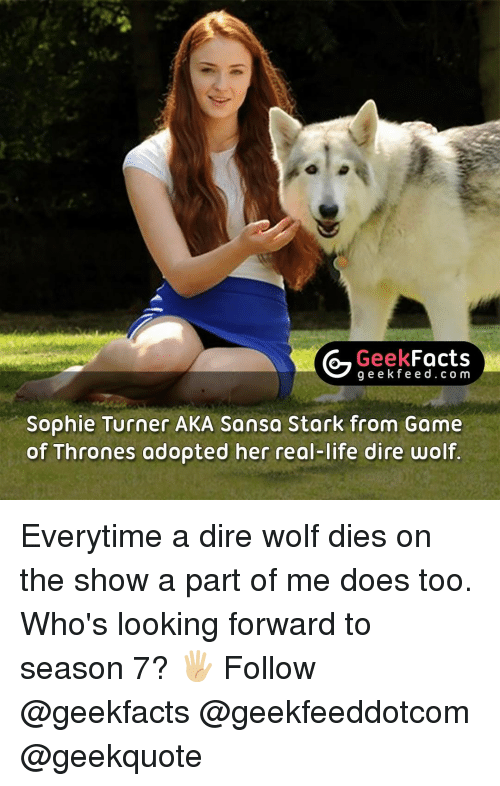 dire wolf: Geek  Facts  g e e k f Sophie Turner AKA Sansa Stark from Game  of Thrones adopted her real-life dire wolf Everytime a dire wolf dies on the show a part of me does too. Who's looking forward to season 7? 🖐🏼 Follow @geekfacts @geekfeeddotcom @geekquote