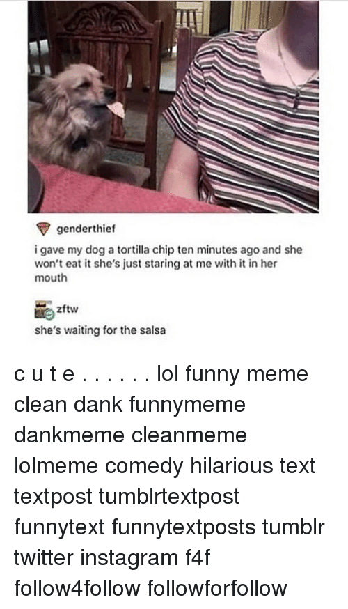 Memes Cleans: genderthief  i gave my dog a tortilla chip ten minutes ago and she  won't eat it she's just staring at me with it in her  mouth  zftw  she's waiting for the salsa c u t e . . . . . . lol funny meme clean dank funnymeme dankmeme cleanmeme lolmeme comedy hilarious text textpost tumblrtextpost funnytext funnytextposts tumblr twitter instagram f4f follow4follow followforfollow