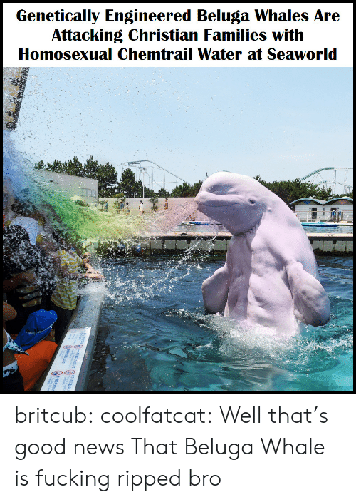 Fucking, News, and SeaWorld: Genetically Engineered Beluga Whales Are  Attacking Christian Families with  Homosexual Chemtrail Water at Seaworld britcub:  coolfatcat:  Well that's good news  That Beluga Whale is fucking ripped bro