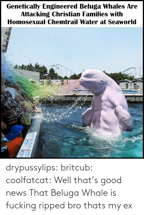 Fucking Ripped: Genetically Engineered Beluga Whales Are  Attacking Christian Families with  Homosexual Chemtrail Water at Seaworld drypussylips:  britcub:  coolfatcat:  Well that's good news  That Beluga Whale is fucking ripped bro  thats my ex