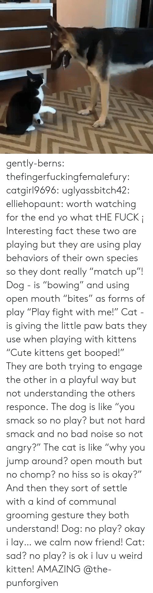 """chomp: gently-berns:  thefingerfuckingfemalefury:  catgirl9696:  uglyassbitch42:  elliehopaunt: worth watching for the end  yo what tHE FUCK ¡   Interesting fact these two are playing but they are using play behaviors of their own species so they dont really """"match up""""! Dog - is """"bowing"""" and using open mouth """"bites"""" as forms of play  """"Play fight with me!"""" Cat - is giving the little paw bats they use when playing with kittens """"Cute kittens get booped!"""" They are both trying to engage the other in a playful way but not understanding the others responce. The dog is like """"you smack so no play? but not hard smack and no bad noise so not angry?"""" The cat is like """"why you jump around? open mouth but no chomp? no hiss so is okay?"""" And then they sort of settle with a kind of communal grooming gesture they both understand! Dog: no play? okay i lay… we calm now friend! Cat: sad? no play? is ok i luv u weird kitten!   AMAZING @the-punforgiven"""