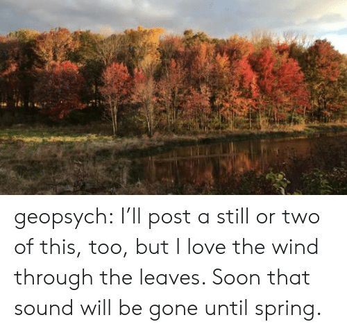 leaves: geopsych: I'll post a still or two of this, too, but I love the wind through the leaves. Soon that sound will be gone until spring.